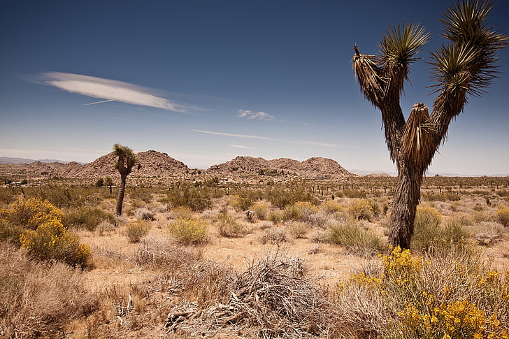 é.-u., voyage, Joshua tree, Parc national, Nuage, Sky, désert