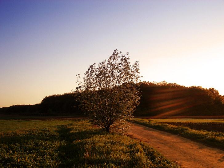 пейзаж, Природа, Закат, Вечер, Вечерний пейзаж