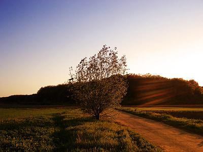 paisatge, natura, posta de sol, nit, paisatge nocturn