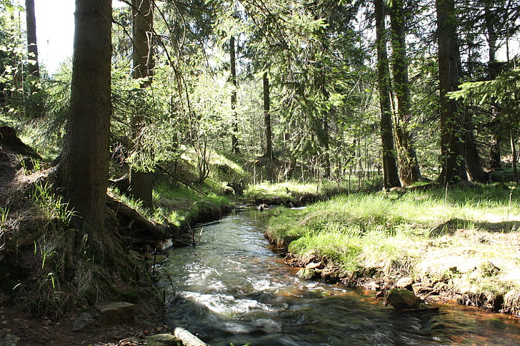 forest, bach, trees, mountain stream, wilderness, nature
