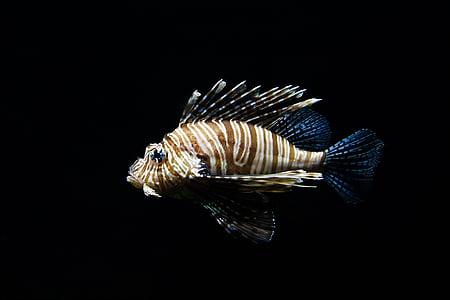 животните, аквариум, риба, плуване, подводни, вода