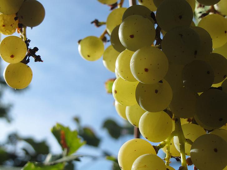 les raisins, Grapevine, raisins verts, fruits, nature, savoureux, vitamine