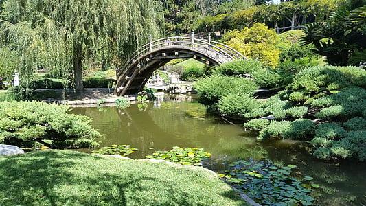 Japonais, jardin, Zen, étang, oriental