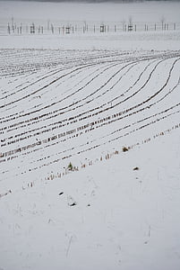 орни, сняг, линии, зимни, снежна, царевица, събере