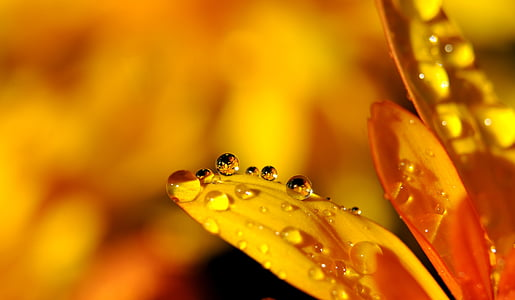 DROPP, droppe vatten, regndroppe, spegling, Blossom, Bloom, blomma