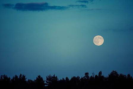 Lluna, cel, nit, fosc, silueta, arbori, natura