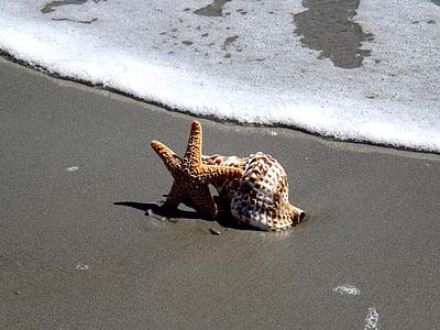 closca, estrella de mar, platja, Mar, l'estiu, oceà, vacances