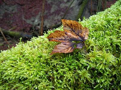 moss, autumn, forest floor, nature, forest, fall foliage, bemoost