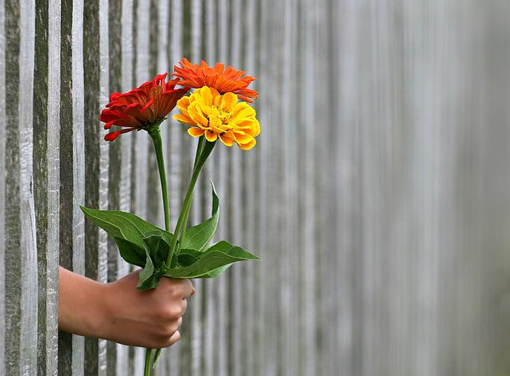 hånd, gave, buket, Tillykke, Kærlighed, give, hegnet