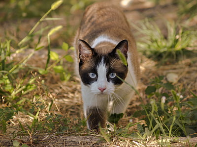 cat, animals, domestic cat, nature, felines, walks, feline