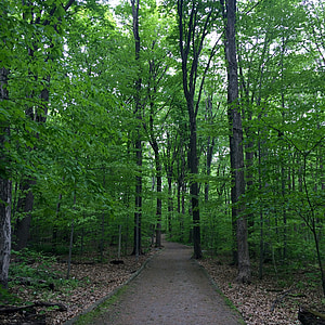 loodus, Park, roheline, maastik, Välibassein, looduslik, looduse taustal