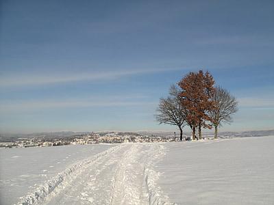 winter, snowy, snow, winter magic, wintry