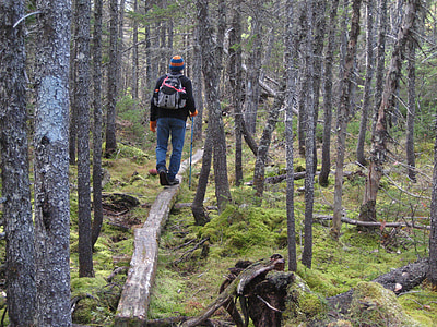 hiking, forest, backpack, nature, outdoor, hike, travel