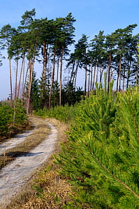 forest, the road in the forest, tree, nature