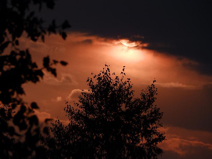 abendstimmung, 일몰, 구름, 나무, 실루엣