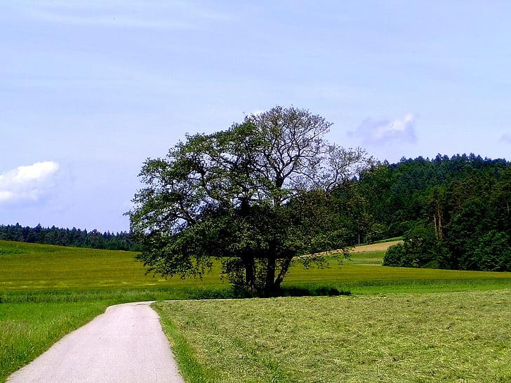 дърво, Есен, дърво през есента, пейзаж, далеч, есенните цветове, настроение