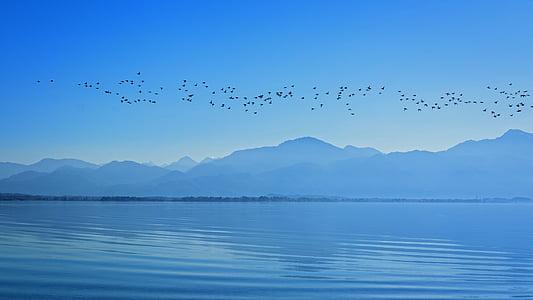 silueta, paisatge, Chiemsee, cel, muntanyes, aus migratòries, l'aigua