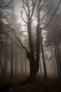 Деревина, страшно, ліс, Природа, Кріттер, туман, Містик