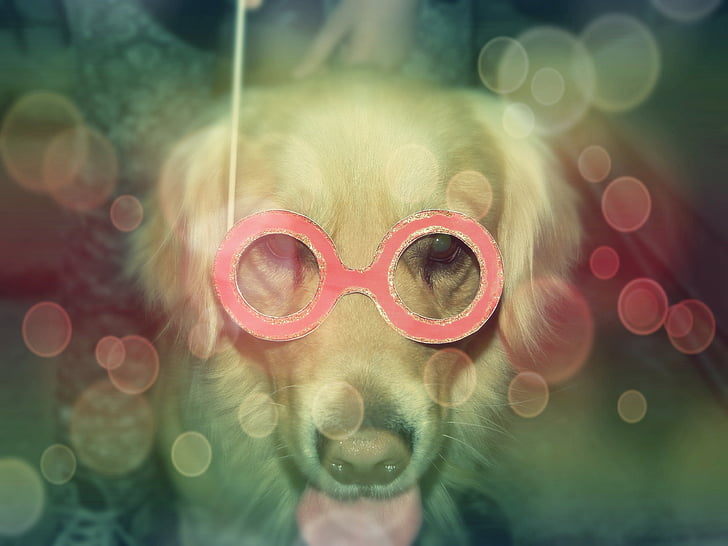 dog, pet, funny, celebration, canine, fun, playful