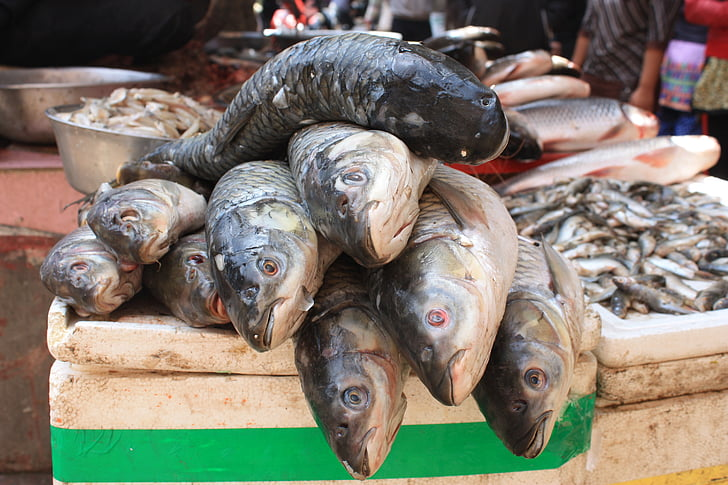 peix, tractament de peix, estand de peix, Nepal, Katmandú