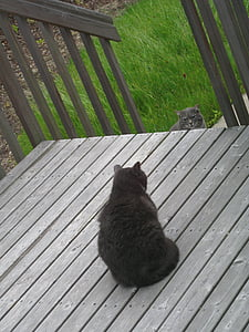 grey, cat, outside, outdoors, deck, wood, grass
