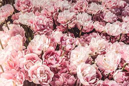 pink, flowers, bunch, bouquet, gift, commercial, pink Color