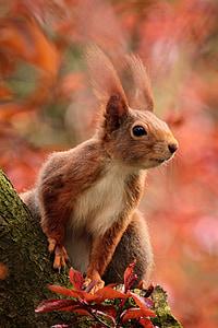 animal, esquirol, atenció, assegut, arbre, mamífer, natura