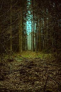 forest, goal, landscape, mystical, fantasy, away, fairytale