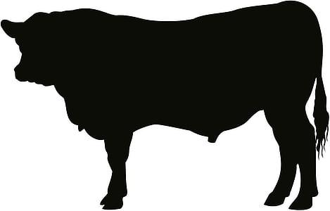 angus, bull, cattle, cow, art, artwork, silhouette