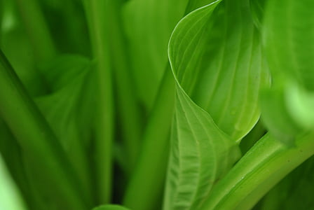 zelená, listy, zelení, Leafs, zelená zelená, list, zelená barva