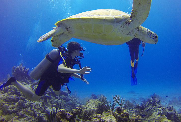 ronilac, kornjača, Meksiko, škola ronjenja, more, boce, plava