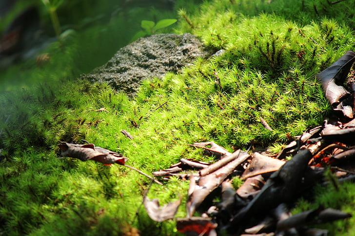 moss, green, sunlight, pa, nature