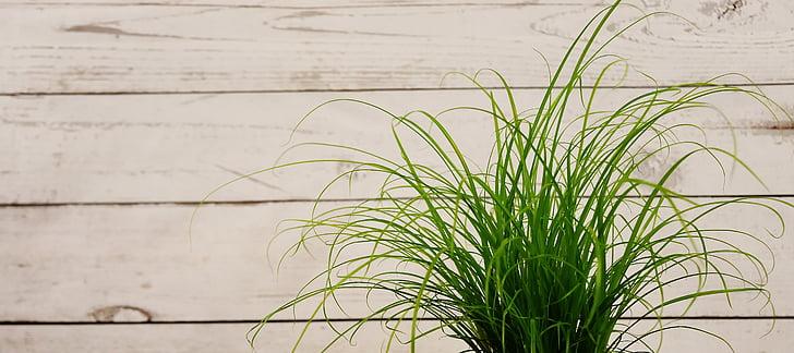žolės, žalia, augalų, Gamta, žalia žolė, žalios spalvos, augimo