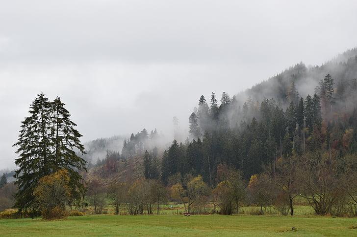 tardor, boira, bosc, estat d'ànim, arbre, morgenstimmung, natura