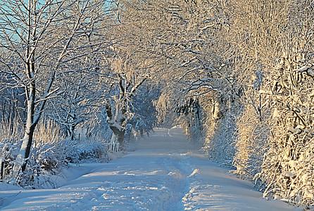 winter, wintry, snow, snow landscape, snowy, snow lane, snow meadow