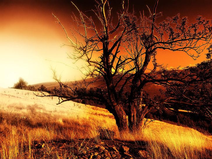 träd, solnedgång, väst, solen, naturen, landskap, Dawn