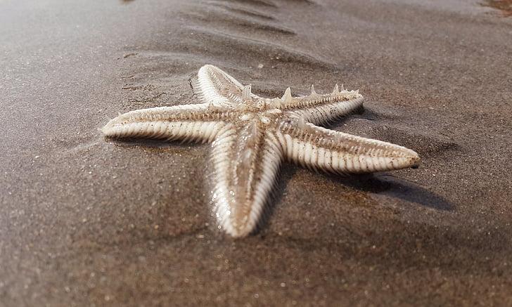 morska zvijezda, plaža, pijesak, Obala, morska obala, Nautički, na otvorenom