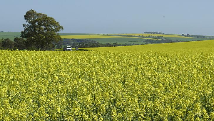 Trang trại, Thiên nhiên, Hoa, màu vàng, nông thôn, lĩnh vực, cảnh quan nông trại