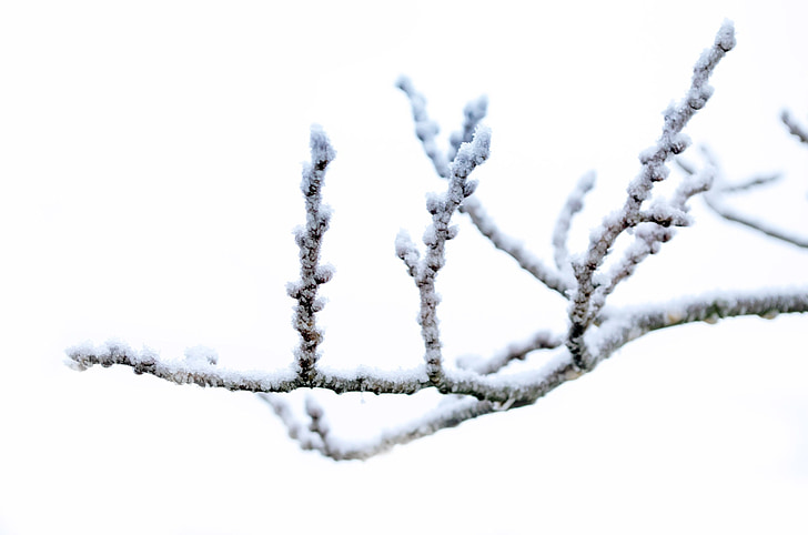 winter, frost, snow, nature, macro, wallpaper, background