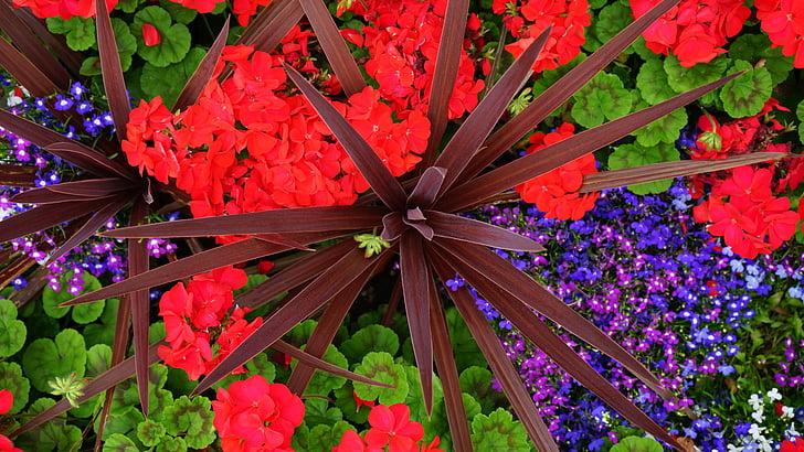 červená, kvety, jar, Zelená, Záhrada, Príroda, letné
