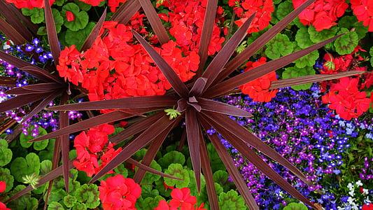 vermell, flors, primavera, verd, jardí, natura, l'estiu