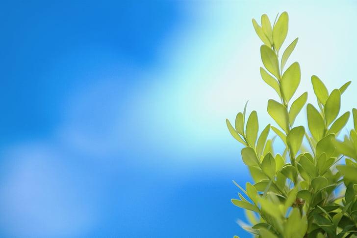 planta, verd, fons blau, jardí