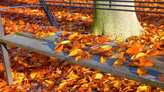 jesień, jesienny liść, spadek koloru, pozostawia, kolory jesieni, kolorowe, Jesienny Las