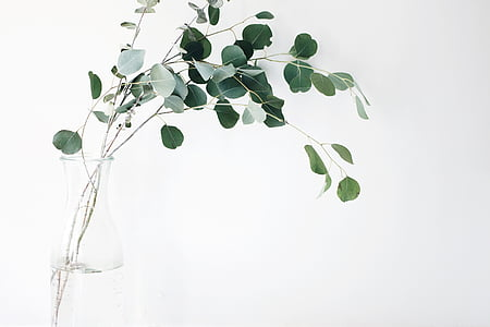 green, leaf, plant, white, background, still, items