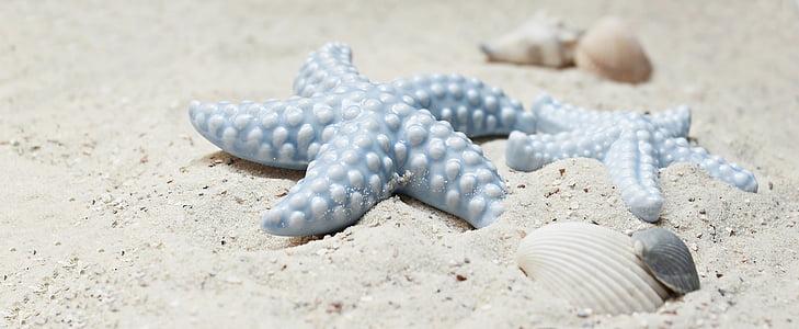 étoile de mer, moules, sable, porcelaine, étoile de mer de porcelaine, porcelaine-étoile de mer, bleu