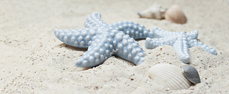 Starfish, mosselen, zand, porselein, porselein starfish, porselein-zeester, blauw