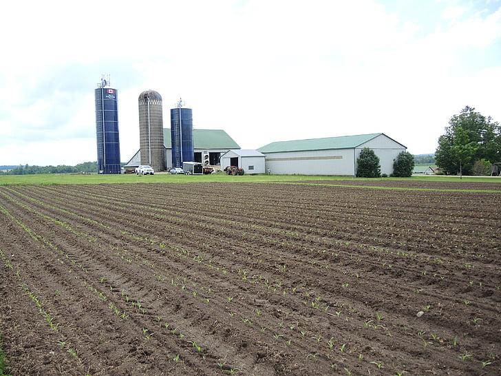 cultivate, field, farm, plant, furrow, farmland, growing