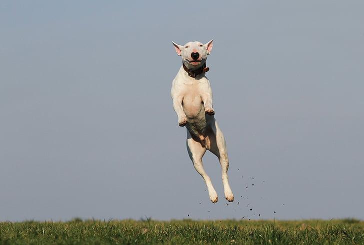 hond, opleiding, vreugde, leuk, Hondenschool