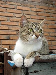 cat, feline, brick