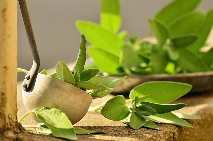 Sage, Các loại thảo mộc, ẩm thực các loại thảo mộc, khỏe mạnh, trà thảo dược, Cầu chúa phù hộ cho bạn, thảo dược thực vật